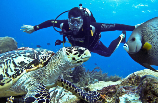 snorkeling and scuba diving essay Plan an underwater adventure during your visit to the hawaiian islands try snorkeling or scuba diving in hawaii.