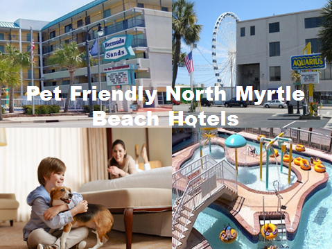 North Myrtle Beach Hotels >> Pet Friendly North Myrtle Beach Hotels With Indoor Pool Book Now